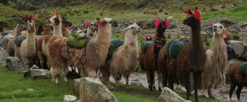 Lares Trek 4 Days / 3 Nights
